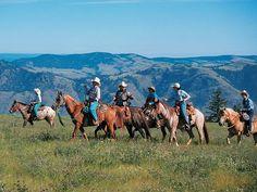calgary cattle - Google Search Calgary, Cattle, Horses, Photography, Animals, Google Search, Gado Gado, Photograph, Animales