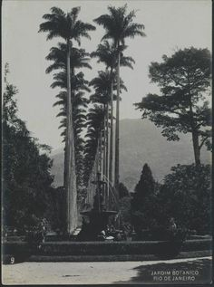Antonio Caetano da Costa Ribeiro. Jardim Botânico, c. 1914. Rio de Janeiro, RJ / Acervo FBN