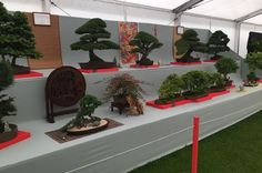 Ken Shaliker has been exhibiting his bonsai trees at Southport Flower Show for 52 years