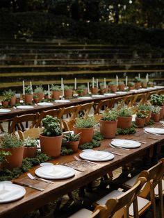 """Our """"Local-Destination"""" Wedding Came to Life in a 104 Year Old Garden Potted Plant Centerpieces, Potted Plants, Centerpiece Ideas, Herb Wedding Centerpieces, Centrepieces, Wedding Menu, Garden Wedding, Wedding Ideas, Wedding Plants"""