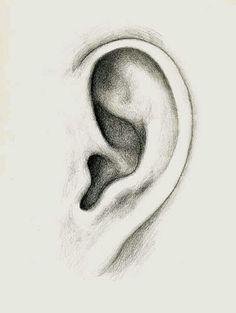 Oreja Pencil Art Drawings, Realistic Drawings, Art Drawings Sketches, Easy Drawings, How To Draw Ears, Art Painting Gallery, Learn Art, Drawing Techniques, Art Plastique