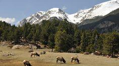 USA - park narodowy Gór Skalistych. Góry Skaliste przecinają USA od pustyni Chihuahua na granicy z Maksykiem do pogranicza stanu Montana z kanadyjską prowincją Alberty i Brytyjskiej Kolumbii.W ich środkowej cząści, na terenie stanu Kolorado, znajduje się PasmoFrontowe nazwane tak przez pierwszych osadników, którzy wędrując od prerii nieoczekiwanie dostrzegali wyniosłą ścianę gór. Park Narodowy Gór Skalistych obejmuje obszar 1076km kw.