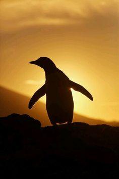 Mi pinguino!!