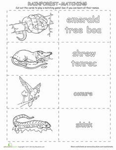 rainforest nouns worksheets google search rainforest topic pinterest search rainforests. Black Bedroom Furniture Sets. Home Design Ideas