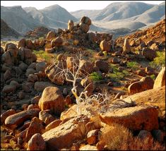 Damaraland is one of the most scenic regions in Namibia with landscapes ranging from expansive sand dunes to soaring mountain peeks, ancient valleys and curious rock formations.   Among the red sandstone boulders and hills at Twyfelfontein is the most impressive collection of petroglyphs in Africa. Around 2,500 ancient rock paintings and engravings feature animals, tracks and abstract symbols. Archaeological evidence indicates that hunter/gatherers lived here more than 7,000 years ago.