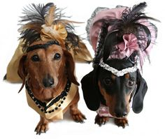 Doxies in Costume. dogs with hats couture animals dogs Dog Halloween Costumes, Pet Costumes, Halloween Ideas, Costume Ideas, Dachshund Love, Daschund, Weenie Dogs, Baby Dogs, Beautiful Dogs
