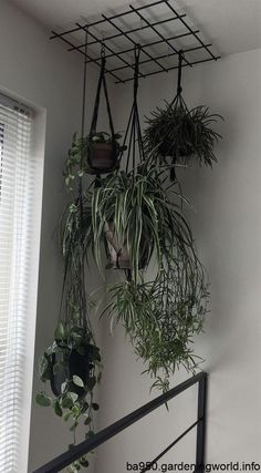 Inside Plants, Room With Plants, House Plants Decor, Indoor Garden, Indoor Plants, Home And Garden, Balcony Plants, Balcony Garden, Decoration Plante