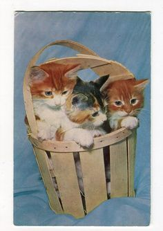 Kittens in Basket  vintage English Cat by sharonfostervintage