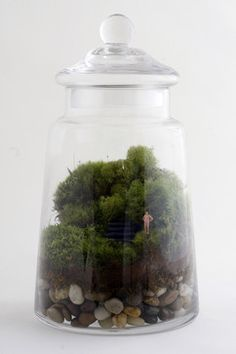 Eclectic Terrariums by Twig. Love the contrast between the big pebbles in the bottom and the moss. Twig Terrariums, Terrarium Plants, Eclectic Terrariums, Terrarium Ideas, Garden Plants, Arte Floral, Horticulture, Indoor Plants, Make It Yourself