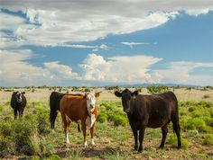 Hudspeth County, Texas land for sale - 30547 acres