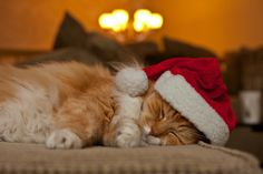 #cat #little #santa #cute #lovely