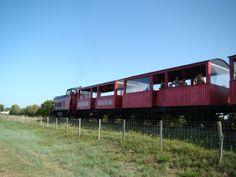 Le train des Mouettes à Mornac-sur-Seudre | Pays Royannais Charente-Maritime Tourisme #charentemaritime | #train | #loisir | #famille | #visite | http://www.en-charente-maritime.com/organiser-sejour/sorties/faire/activites/train-des-mouettes-saujon