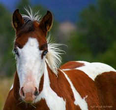 The wind of heaven is that which blows between a horse's ears. Arabian Proverb.