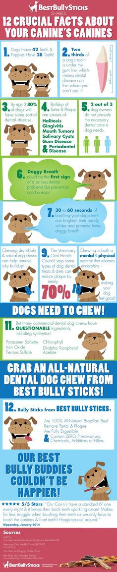12 Things You Need to Know About Your Canine's Canines (good info - I like how they say Bully Sticks are simply 'beef'!)