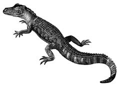 Alligator Clip Art   KatieO has been searching for an old Alligator image . This one comes ...