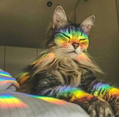 The wise rainbow cat - your daily dose of funny cats - cute kittens - pet memes - pets in clothes - kitty breeds - sweet animal pictures - perfect photos for cat moms Cute Kittens, Cats And Kittens, Kitty Cats, I Love Cats, Crazy Cats, Beautiful Cats, Animals Beautiful, Majestic Animals, Cute Baby Animals