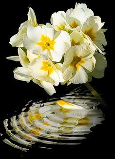 Flowers Photograph by Svetlana Sewell -