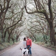 A perfect recipe for an Engagement session here in the south... doggies, dirt roads, and love! Cute southern couple photo by @billiejojeremy  #engagement #lowcountry #southernwedding