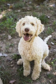 Truffle-Hunting Puppy  - TownandCountryMag.com