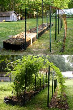 make a canopy tunnel with posts and wire fencing plus many climbers. Does not have to be straight, could curve and guide from one garden area to another. Potentially v. mysterious and romantic. Am thinking add some winter scented shrubs and tie them to the structure as they grow,  to really make it earn it's keep.
