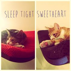 cat wall shelf #cosyanddozy #catshelf #furniture #chillshelf