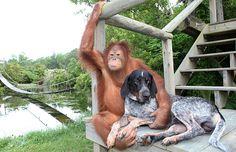 10 bijzondere vriendschappen tussen dieren