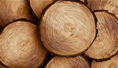Wood, hard and durable substance that forms the trunks of trees, was the first material used by man because of its features such as ease of formation, low specific weight, pleasing appearance and good mechanical, thermal and acoustic properties, etc.