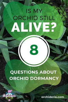 Is my Orchid Dead or Dormant? Top 8 Questions About Dormancy — Orchideria Container Gardening Vegetables, Succulents In Containers, Container Flowers, Container Plants, Vegetable Gardening, Indoor Orchids, Indoor Plants, Potted Plants, Exotic Flowers