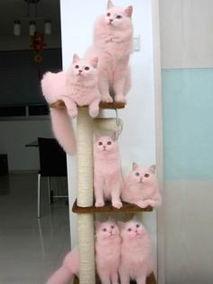 Pink cats! Seriously! You've gone a bit too far in recognizing Breast Cancer Awareness Month!!