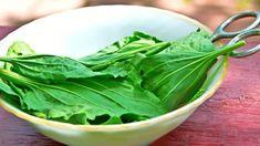 jitrocel Lettuce, Spinach, Cabbage, Vegetables, Food, Medical, Essen, Medicine, Cabbages