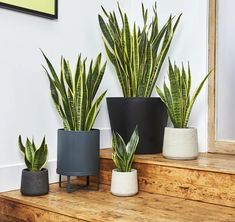 Unkillable houseplants and low maintenance indoor plants should be in everyone's home. We've listed the top six indoor plants that anyone is able to look after. Best Indoor Plants, All Plants, Types Of Plants, Indoor Garden, Sansevieria Trifasciata, Mother In Law Tongue, Corn Plant, Chinese Money Plant, Diy Outdoor Furniture