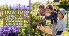 How to start a veggie garden - Margate Furnishers Different Vegetables, Different Plants, Garden S, Home And Garden, Crop Rotation, Summer Plants, See The Sun, We Are A Team, Top Soil