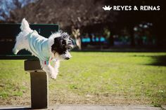 Primavera Verano / Pug / Jack Russell Terrier / Poodle / Caniche / Plaza / Juegos / Park / Happy dog / Fashion Dogs Dog Fashion, Jack Russell Terrier, Happy Dogs, Poodle, Pugs, Horses, Animals, King Queen, Spring Summer