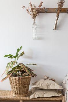 Una planta, tres estilismos (#UrbanJungleBloggers) | Ebom