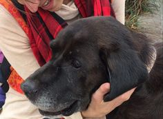 <p>These organizations see the beauty in senior dogs and are working to make sure they have the best life possible. Through their work, pets who once had nobody will know love for the remainder of their time, no matter how long that might be.</p>