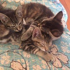 Napping Patmores. by theittybittykittycommittee