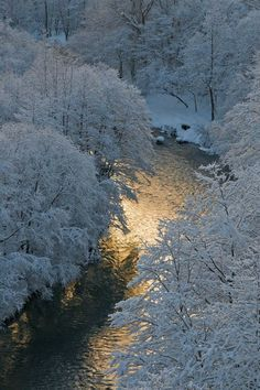Winter Scenery: icy-blue river running through a snow covered wood I Love Winter, Winter Snow, Winter White, Winter Schnee, Foto Poster, Winter Magic, Snow Scenes, Winter Beauty, Winter Pictures