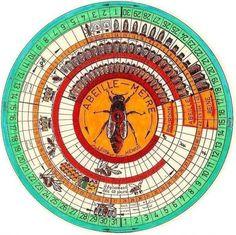 bee wheel