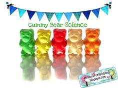 """Gummy Bear Science My kids had a great time experimenting with gummy bears! We used the """"Black Forest"""" brand of Gummy Bears - results may va. 1st Grade Science, Kindergarten Science, Middle School Science, Elementary Science, Science Classroom, Teaching Science, Teaching Ideas, Classroom Ideas, Preschool Age"""