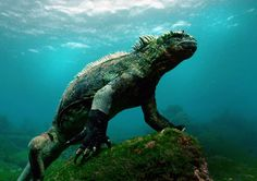 The next episode of David Attenborough's Galapagos