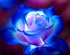 Imagen: IMÁGENES DE FLORES ® Fotos de Rosas, Margaritas o Lirios