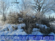 Brush piles provide great cover habitat for birds and other wildlife, and they are easy to create: http://bit.ly/1rMNrZj