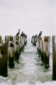 Cape Cod | Massachusetts (by herax)