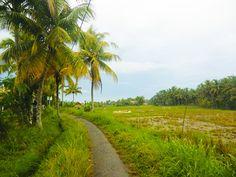 8/11(木)バリ島ウブドのお天気は曇り。室内温度27.2℃、湿度79%。午前中は雨が降っていましたが午後は明るくなってきました♪草木が雨に濡れ、しっとりとした空気が漂います。