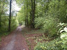 Bois de Velennes 2002   Venez découvrir les forêts de l'Oise !   © Oise Tourisme Oise, Country Roads, Nature, Tourism, Flowers, Naturaleza, Nature Illustration, Off Grid, Natural