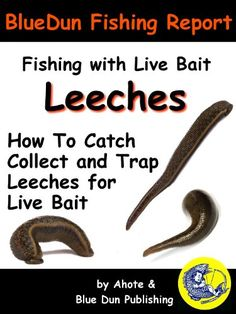 Fundamental live bait rigging for walleyes northern pike for Live fishing bait near me