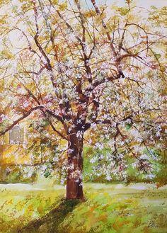 """Pear Tree Watercolor by Gabriela Calinoiu Pear Trees, Watercolor, Artist, Plants, Pen And Wash, Watercolor Painting, Watercolour, Planters, Watercolors"