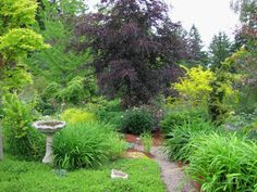 My friend Diana's garden in Eugene Oregon. Gorgeous!