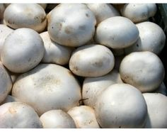 How to Grow White Button Mushrooms