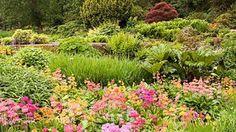 RHS Garden - Harlow Carr in Yorkshire. Candelabra primulas along the Streamside.